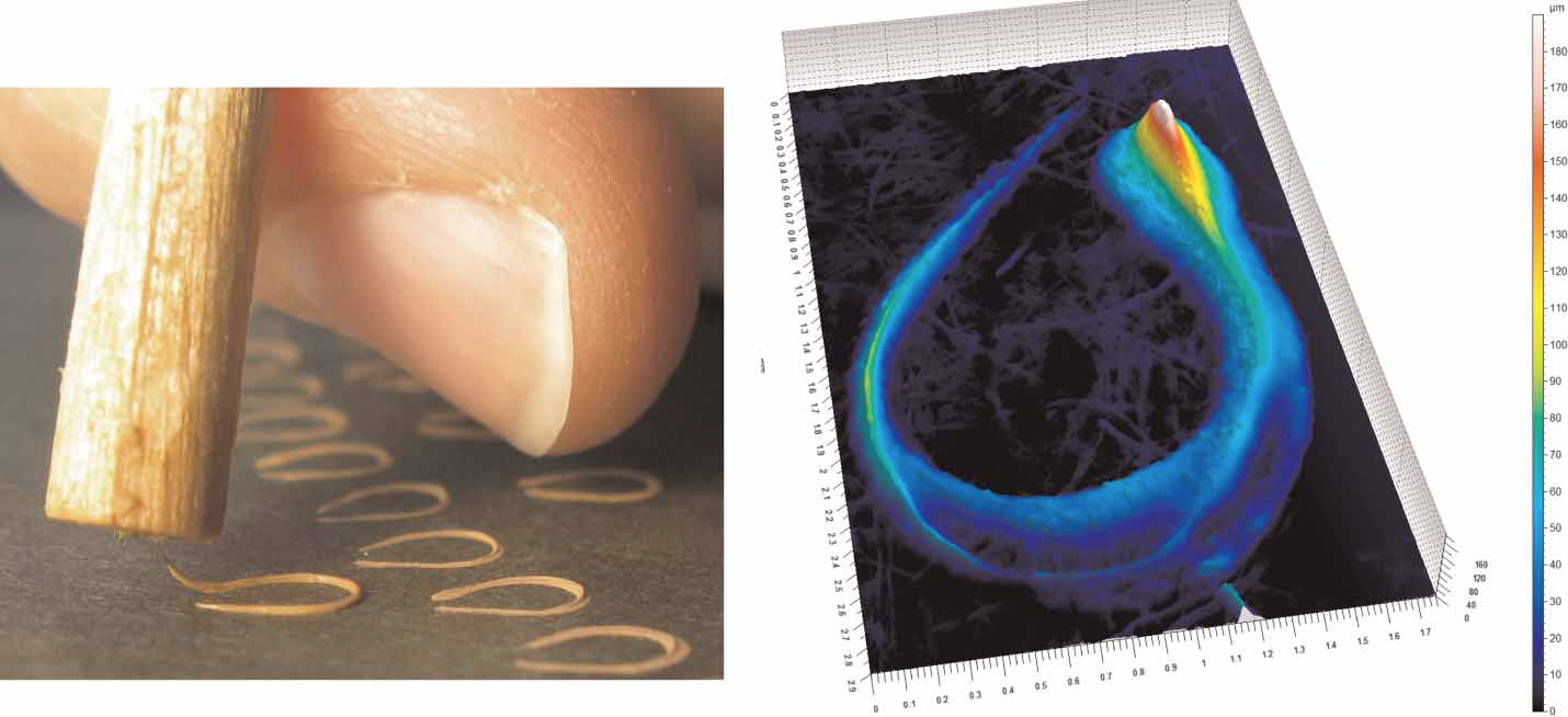 A linierhaar made of human hair is used to produce looped laid lines similar to that seen in Fig. 10 (left) (photo by Kari Kipper). A 3D elevation map of one such fabricated looped line displays topographical features distinctly similar to the ancient looped line (right). The threshold setting in the elevation map was adjusted to remove the majority of measurements associated with the cardboard substrate. The dimensions of the elevation map are 1.73 × 2.9 mm. The elevation scale bar is in μm.